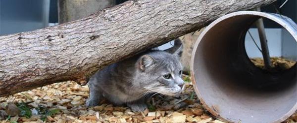 Dyrenes Beskyttelses tilbyder nu luksusferie til din kat