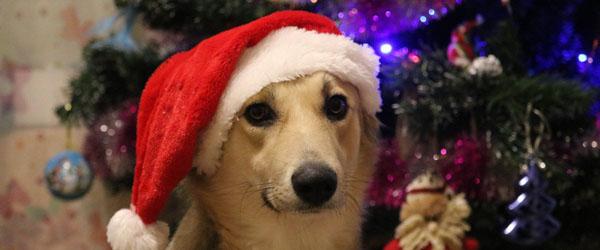 Sådan holder dit kæledyr vægten i julen