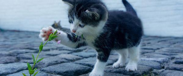 Boom i katteforsikringer under corona
