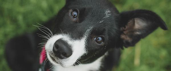 Pas på, at dit kæledyr ikke bliver bidt
